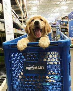 Always keep your pet Happy & Healthy Win a $1000 Gift Card - 100% FREE Pet Meals for one year!  Click here  http://DogsDogsBaby.us/GiftCard
