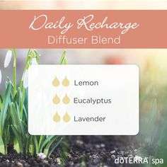 Learn all about lavender essential oil? Included is all there is to know about doTERRA lavender essential oil uses including DIY, food & diffuser recipes Are Essential Oils Safe, Essential Oil Diffuser Blends, Doterra Essential Oils, Doterra Blends, Doterra Diffuser, Young Living, Eucalyptus Essential Oil Uses, Lavender Oil Benefits, Diffuser Recipes