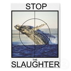 Petition To SOUTH KOREA: Stop Hunting Whales. http://www.change.org/en-GB/petitions/south-korea-stop-hunting-whales?utm_campaign=autopublish_medium=facebook_source=share_petition_term=7674755 @SeaShepherd #defendconserveprotect