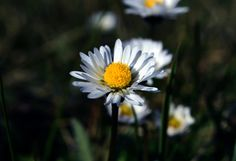 I'm Daisy... by Remo Fiebig on 500px