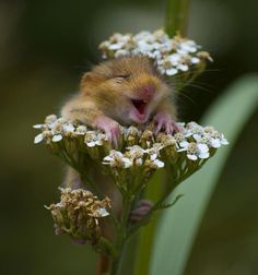A smiling, incredibly cute, happy lil' mouse in a bunch of flowers. And possibly the greatest photo ever taken!