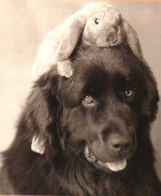 rabbit riding dog