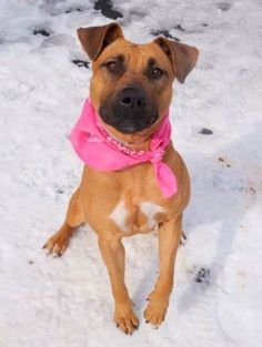 ★6/26/15 SHE'S STILL THERE! SHE WAS RETURNED ON 3/29/15!!★★HAZEL – A1029312 – MANHATTAN, NY | Help us Save NYC AC&C Shelter Dogs