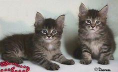 #cute #kittens #cats #pussycat