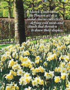 flower Magazine | Jan/Feb 2016