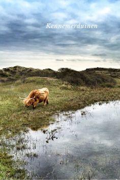 Kennemerduinen National Park in The Netherlands The Beach between Zandvoort and IJmuiden