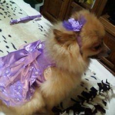 Large purple dress , bow, leash 15.99