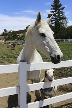 Yes, there is actually a place that combines wine and a safari. This Malibu Wine Safari takes place at Saddlerock Ranch, a acre vineyard and ranch. Malibu Wine Safari, Malibu Wines, Best Wine Clubs, Thing 1, Travel Usa, Horses, Animals, Bucket, Luxury