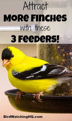Includes a great comparison among the three different styles of finch feeders. By using nyjer seed in these bird feeders, I am able to consistently see lots of goldfinches and house finches. Backyard Birds, Garden Landscaping, Finch Feeders, Funny Bird, Bird Feeding Station, Bird House Kits, Finch Bird House, Gardens, Birdhouses