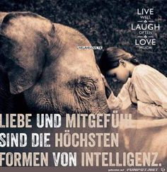 jpg by Sasse- funpot: Intelligenz.jpg by Sasse - Poetry Quotes, Wisdom Quotes, True Quotes, Best Quotes, Funny Friday Memes, Vegan Quotes, Susa, Epic Texts, Thats The Way
