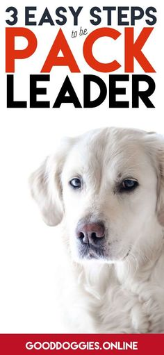 You can address a lot of dog behavior issues through becoming your dogs pack leader.