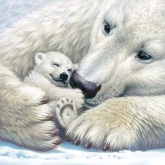 Polar Bear - mummy and cup - illustration by Anton Petrov