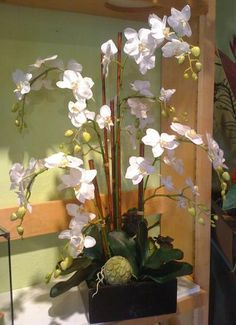 Orchids planted in wood box