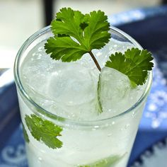 Ginger Coconut and Cilantro Cocktail