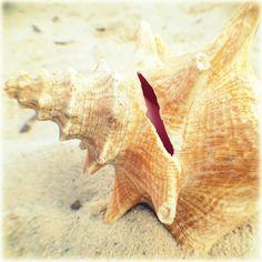 Seashell Beach Photography   Shabby Coastal by BeachBumChix, $15.00