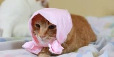 This Cat's Feelings About Wearing A Bonnet Are Complex