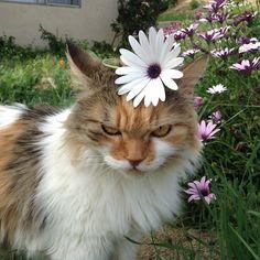 Imagem de cat, flowers, and animal