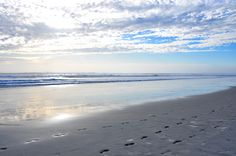 daytona-beach-footprints-in-the-sand-pictures-photos.jpg 4,288×2,848 pixels