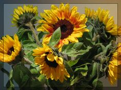 Sunflowers by maska13 on DeviantArt