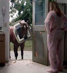 """Horse with Head Stuck in Dog Door. """"Well you should have just let me in."""". horse, door, stuck, pets, Animals, dog door"""