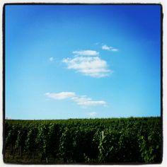 Vineyard Vineyard, Clouds, Nature, Outdoor, Outdoors, Naturaleza, Vine Yard, Vineyard Vines, Outdoor Games