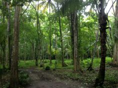 Jade Mountain, St Lucia Caribbean Honeymoon, Jade Mountain, Amazing Destinations, Trips, Plants, Travel, Viajes, Traveling, Destinations
