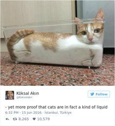 The 27 Funniest Tweets About Cats in 2016 | BlazePress