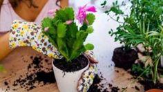 Tuto radu mi dal před lety tchán a těžíme z ní dodnes: Každý zahrádkář potřebuje pro bohatou úrodu jen tuto 1 věc! – Domaci Tipy Plants, Plant, Planets