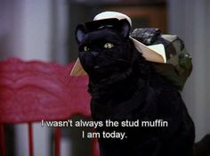 """25 Signs You're Salem Saberhagen From """"Sabrina The Teenage Witch"""" Sabrina Cat, Salem Cat, Salem Saberhagen, Cat Memes, Funny Memes, Sabrina Spellman, Your Spirit Animal, Stud Muffin, My Mood"""