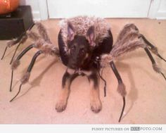 Pet costumes | Cosplay Daily | The Only Acceptable Pet Costumes