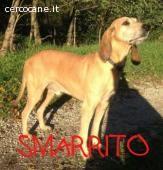http://www.cercocane.it/aggiungi-annuncio/9-smarriti-e-trovati/1573-smarrito-e-forse-rubato.html