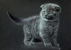 Котики кот, пастель, рисунок, графика