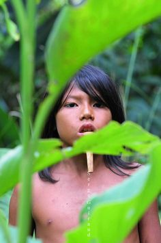 Zo'é  -isolated tribe living deep in the Amazon rainforest  - Brazil.