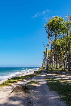 Cosmos, Second Best, Baltic Sea, Germany Travel, Palm Trees, Beautiful Places, Coast, Photos, Tropical