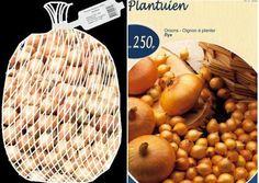 Coltivare le cipolle partendo dai bulbilli per una produzione precoce - Coltivare l'orto