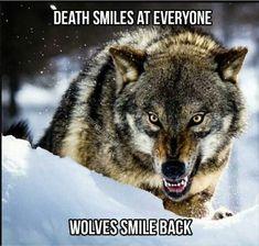 Wolf.... ❤