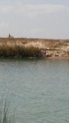 Schwimmen am See in der Seestadt Aspern, quasi ums Eck von der Werbeagentur