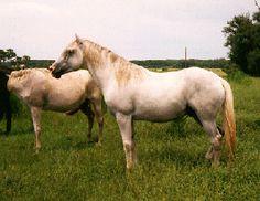 Florida cracker horse association inc
