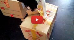 Boston Terrier Opens Up Delivery Box in Bangkok, Thailand! Watch the Video here ► http://www.bterrier.com/?p=23781 - https://www.facebook.com/bterrierdogs