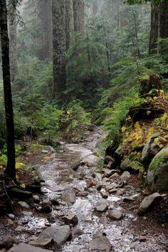 Pilchuck Trail and Rain Washington State