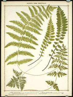 fern theme save the date - Google Search