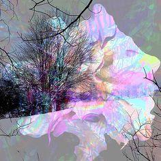 Large Pink FlowergoldTealPeachBlue Wall by PhotoSynthetics on Etsy