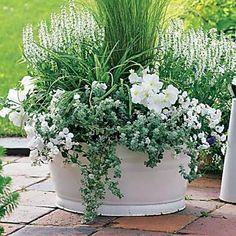 Outdoor Planters, Flower Planters, Unusual Plants, Unique Gardens, White Gardens, Deco Table, Plant Decor, Vegetable Boxes, Garden Pots