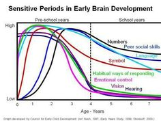 Unborn Baby Brain Growth Stages Of Development Http Www