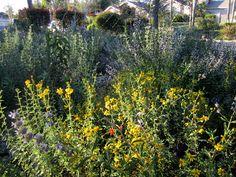 mudd-native-garden-flowers