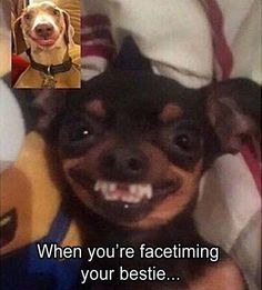 Funniest Animal Memes Of The Day That Are Extremely Hilarious Pics) - Page 3 of 3 - Awed! Funny Animal Jokes, Crazy Funny Memes, Really Funny Memes, Stupid Funny Memes, Cute Funny Animals, Funny Relatable Memes, Haha Funny, Funny Dogs, Funny Quotes