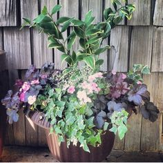 Shady urn on the front porch with Solomon seal, huchera, impatiens, and ivy