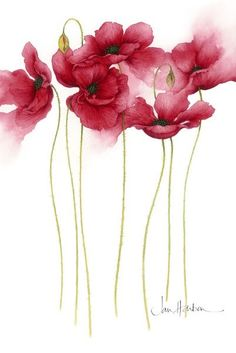 Poppies by Jan Harbon [so perfect] This im. - Introducing artist, Jan Harbon… Poppies by Jan Harbon [so perfect] This image has get 15 repi - Art And Illustration, Art Illustrations, Fashion Illustrations, Art Floral, Watercolor Flowers, Painting Flowers, Floral Paintings, Tattoo Watercolor, Watercolour Paintings