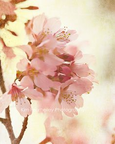 Soft and Breezy by Kim Fearheiley Photography