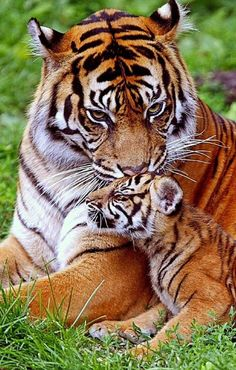 "beautifulwildlifenatur18: ""Source :beautiful wildlife nature "" #BigCatFamily"